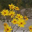 .....yellow flowers for you. italia - europa -..my belovedAnna ! .adorata Anna sei solo  tu....annamaria.  - 2000 visualizzaz .2013..FEATURED RB EXPLORE 15 GENNAIO 2012-- by Guendalyn