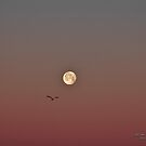 Morning Moon by JoeDavisPhoto