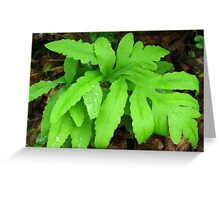 Sensitive Fern with Rain Drops Greeting Card