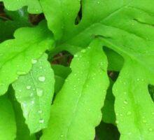 Sensitive Fern with Rain Drops Sticker