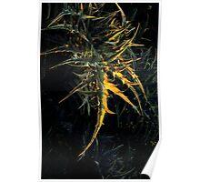 nature fractal, wild plant Poster