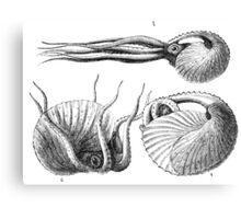 Vintage Natural History Mollusca Illustration Canvas Print