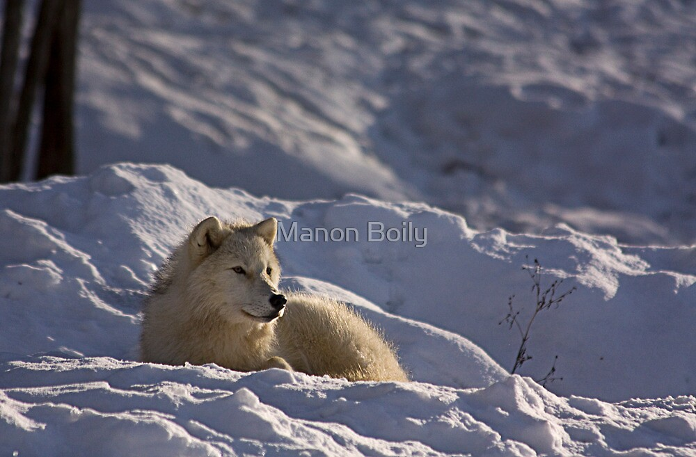 cold serenity by Manon Boily