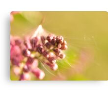 Seed Caught in Lilac Canvas Print