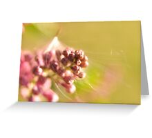 Seed Caught in Lilac Greeting Card