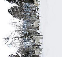White on White by Kara Rountree