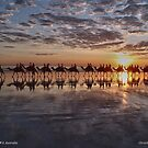 ''Camel Ride Cable Beach Broome'' by bowenite