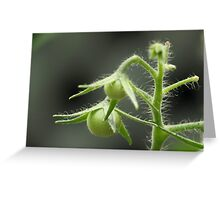Budding tomatoes Greeting Card
