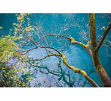 Amazing colors of mossy tree and deep lake at Jiuzhaigou Valley National Park Photographic Print