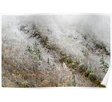 High mountain forest, covered by snowy hoar frost, Huanglong Poster