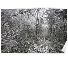 Magical winter forest Poster