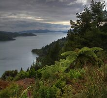 Marlborough Sounds New Zealand - Punga Cove by Paul Duckett