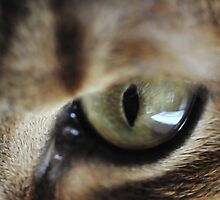 Cats'Eye 2 by LL by Laura Lawrence