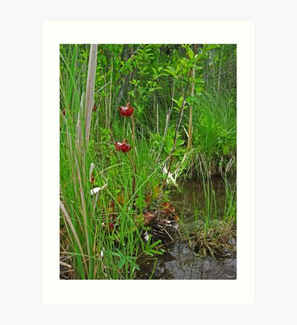 Red Water Flower Scene Art Print