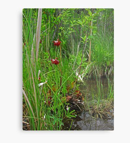 Red Water Flower Scene Metal Print