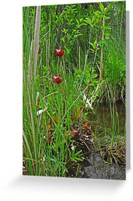 Red Water Flower Scene by Thomas Murphy