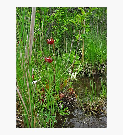 Red Water Flower Scene Photographic Print