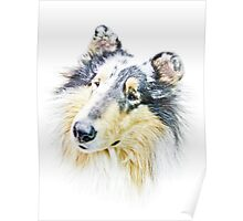 Beautiful Collie Poster
