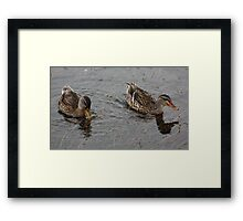 Yellow Bill Orange Bill Framed Print
