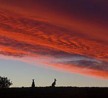 Sunset Silhouettes  by Carolyn Boyden