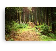 Sunshine in the Woods Canvas Print