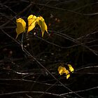 Autumn Leaves by photografixdesi
