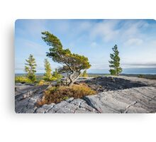Bending tree is struggling for life on a mountain top, Killarney, Canada Canvas Print