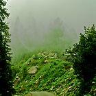 Foggy road by M-A-K