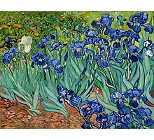 Vincent Van Gogh - Irises Photographic Print
