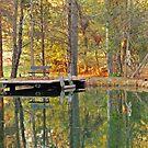 The Pond by Robin Black
