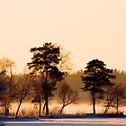 Golden light by LadyFi