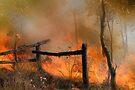 The Bush Fire Season by Eve Parry