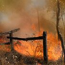 The Bush Fire Season by Eve Parry