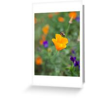 Californian poppy with a bee! Greeting Card