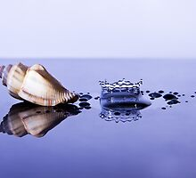 Sea Shell with Splash by Riaan Roux
