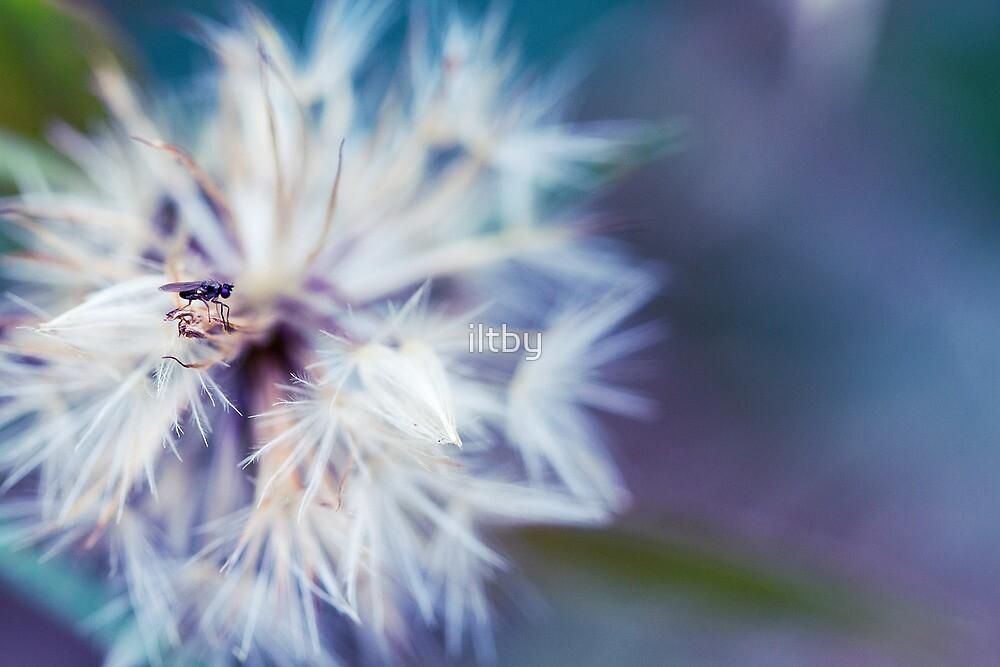 Small World by Josie Eldred