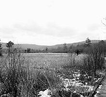 Mountain Meadow by hubcap