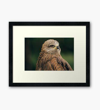 Power Bird II Framed Print