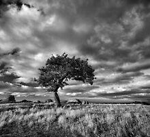 Windswept by Mieke Boynton