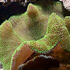 Amazing Green Coral by Jane Neill-Hancock