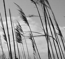 Grasses by Robin Black