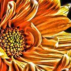 Orange Daisy by Robin Lee