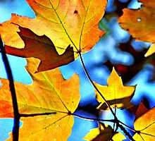Autumn Leaves by Robin Black