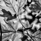 Leaves in Black and White by Robin Lee