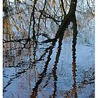 Reflections by Robin Lee
