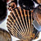 Seashell by Robin Lee