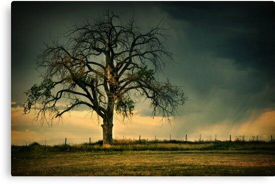The Tree Of Life 2 by John  De Bord Photography