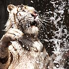 White Tiger White Water by Epicurian
