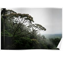 View from a hanging bridge - Costa Rica Poster