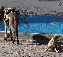 It Seems That This Donkey has Fleas - Parece Que Este Burro Tiene Pulgas by Bernhard Matejka
